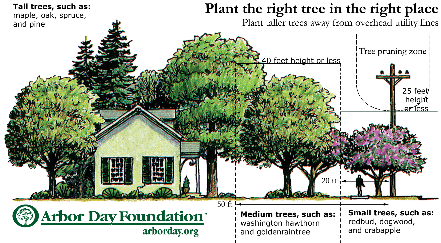 Right of Way Tree Placement Image